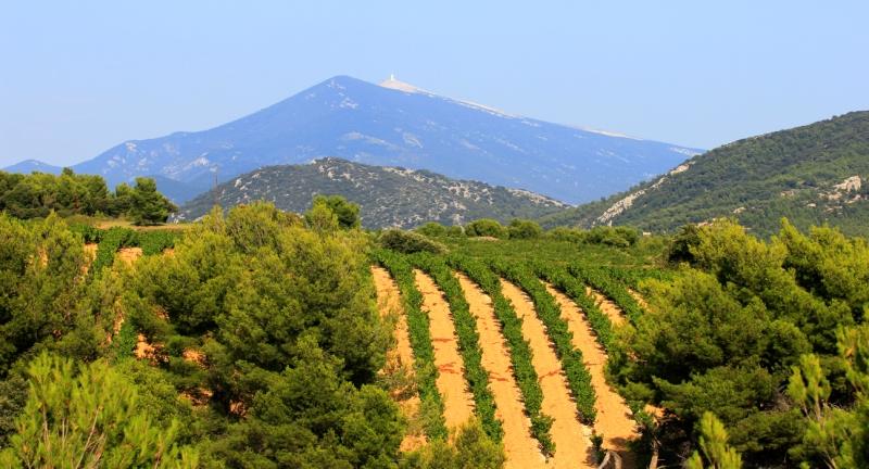 Vignoble de la Vallée du Rhône méridionale.