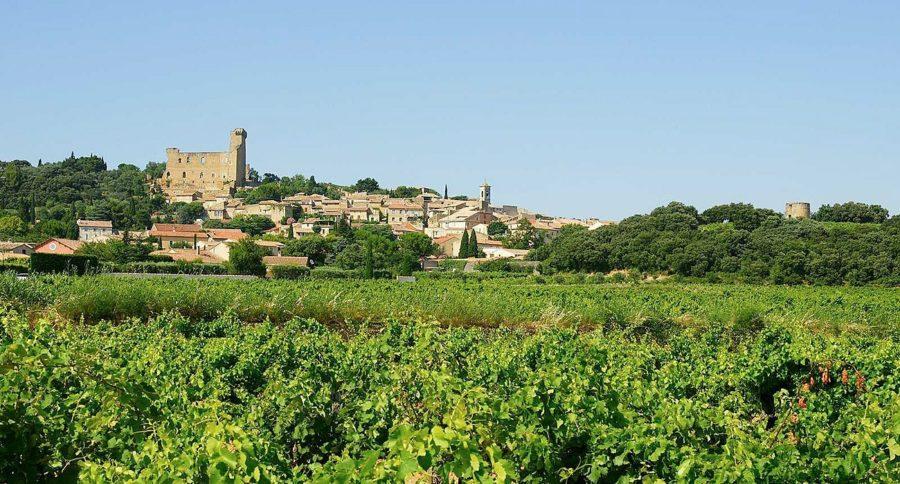 Vignoble du Domaine Charvin à Châteauneuf-du-Pape.